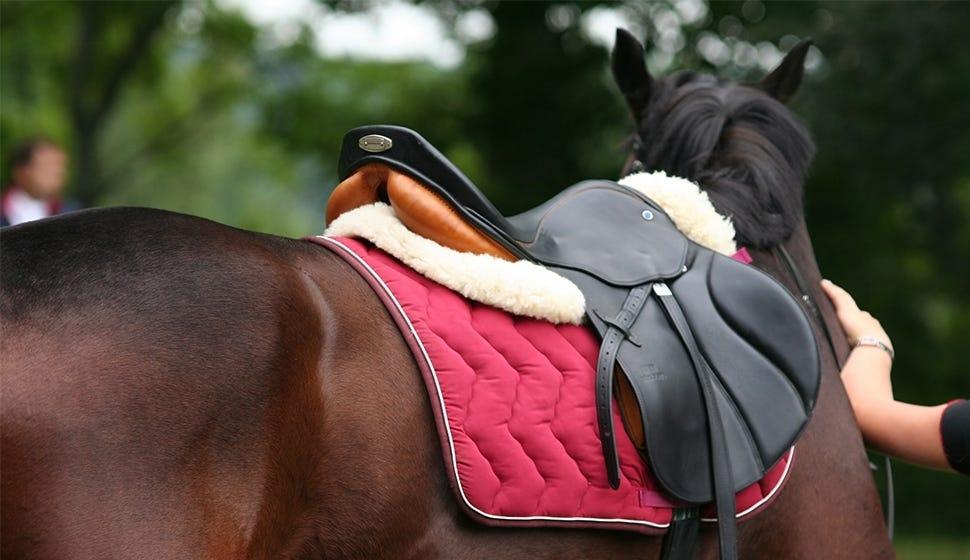 Clothing & Horse Tack
