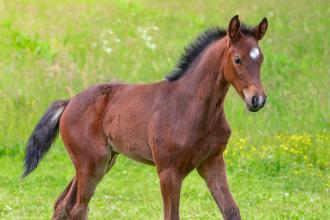 You're having a foal?