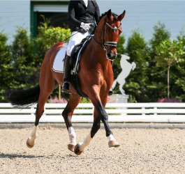 How to Keep Your Horse Calm: A guide to a stress-free show