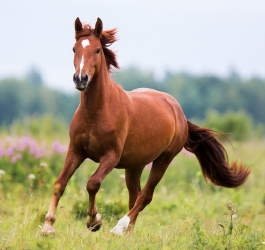 Did you know THIS about horse?
