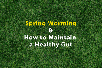 Spring Worming