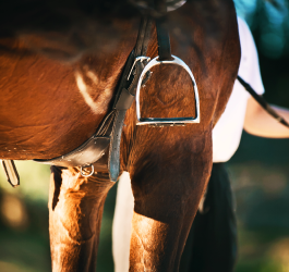 What Does Good Gut Health Mean for Horses?