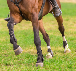 The Cause of Equine Leg Swelling and How to Reduce It