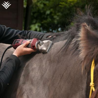 Top Tips for Clipper Care (Equine Clippers)