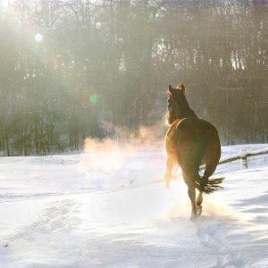 Festive Fun with your horse